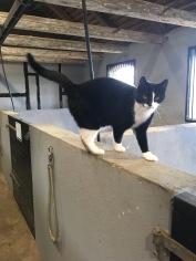 Katten Bob i stallet